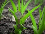 ВКазахстане предложили создать аграрный банк
