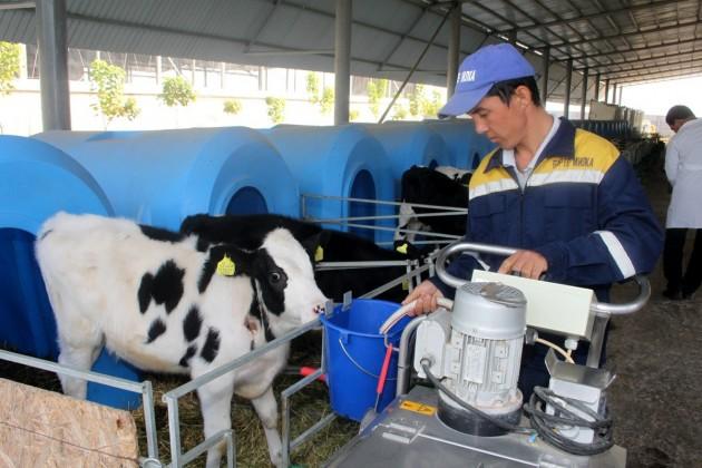 ВЮжном Казахстане появится новый молочный завод